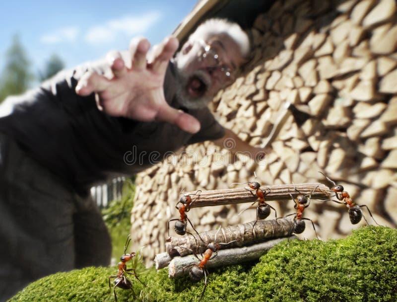 Mens, mieren en brandhout, diefstal of hulp royalty-vrije stock foto