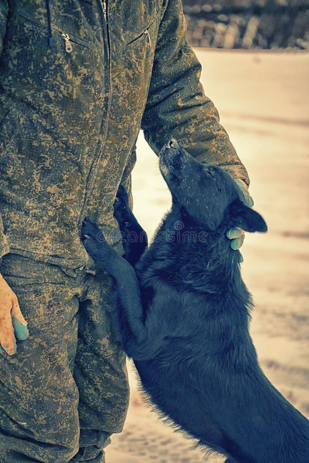 Mens in militaire eenvormig strijkend een hond de mens toont medelijden en zorg voor dakloze dieren vriendelijkheid stock afbeelding
