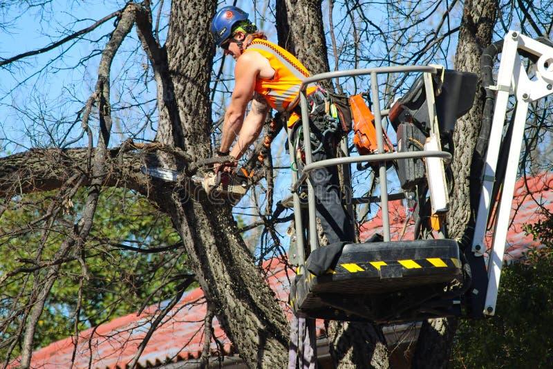 Mens op een kraan omhoog in een boom die een tak met een kettingzaag met houten spaanders in orde maken die Tulsa Oklahoma de V.S stock fotografie