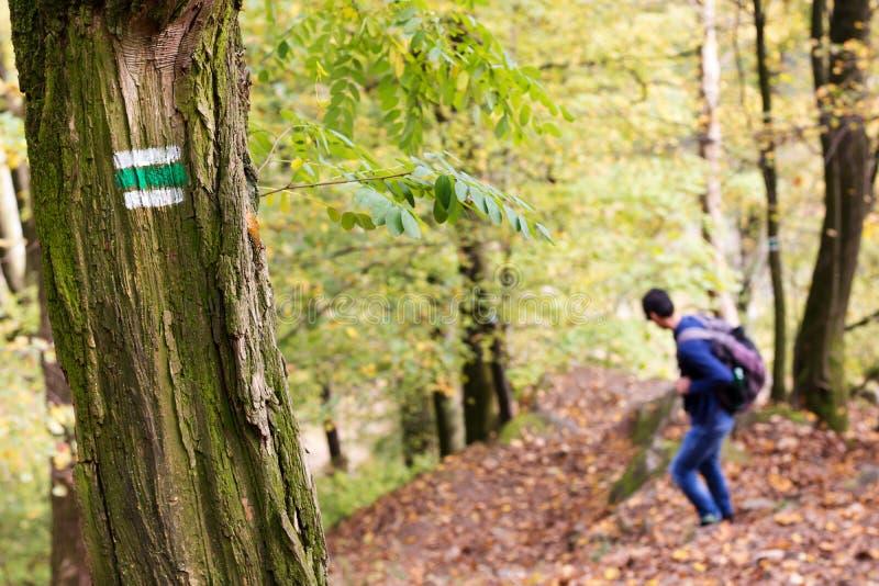 Mens op wandelingsweg in een bos, een sleepteken of een teller op een boom stock foto