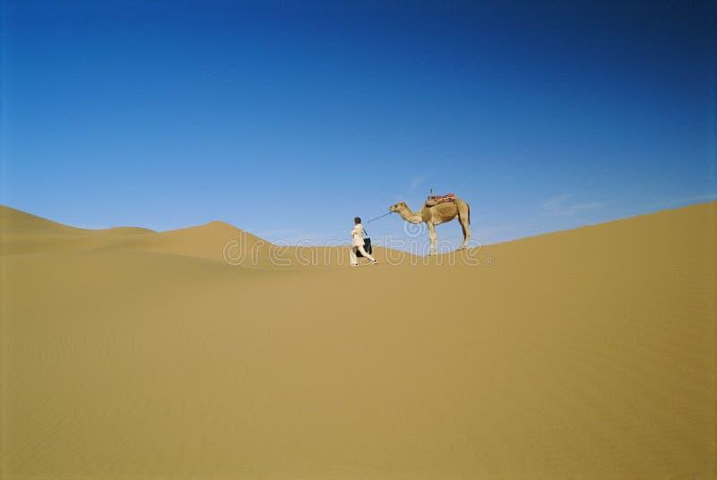 Mens in woestijn met koppige kameel royalty-vrije stock foto