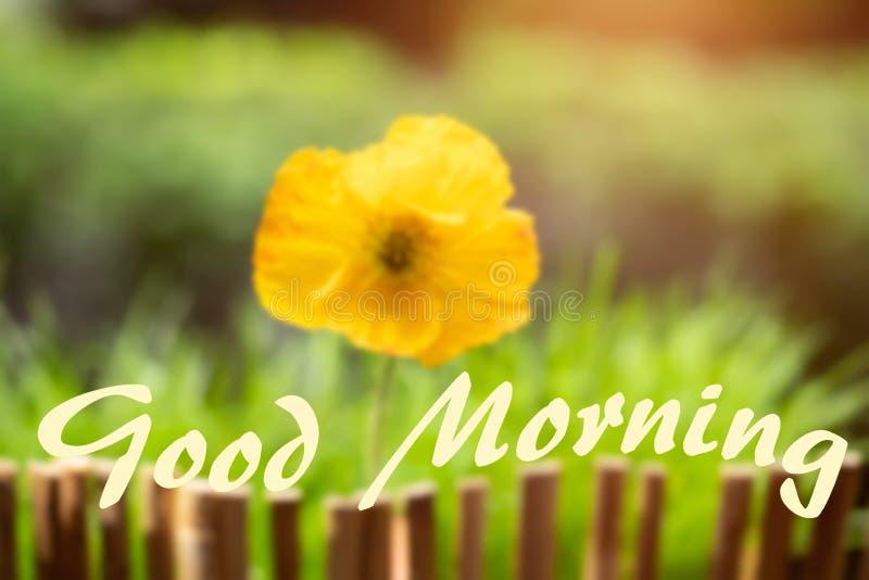 Mensagem do bom dia em um fundo floral fresco fotos de stock