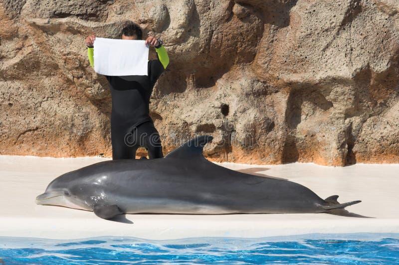 Mensagem do golfinho fotos de stock