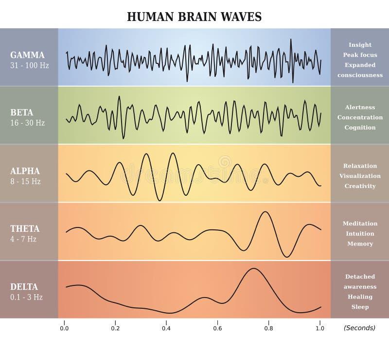 Mensch Brain Waves Diagram/Diagramm/Illustration lizenzfreie abbildung