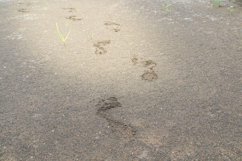 Menschliche Abdrücke auf Boden rieben im hellen Effekt lizenzfreies stockfoto
