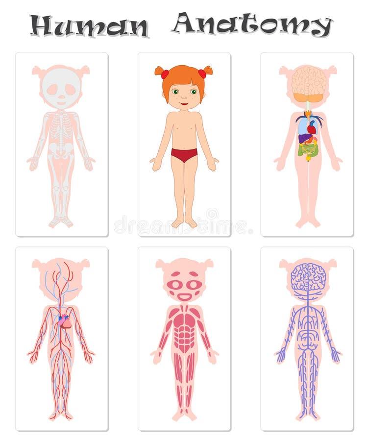 Groß Anatomie Für Kinder Galerie - Menschliche Anatomie Bilder ...