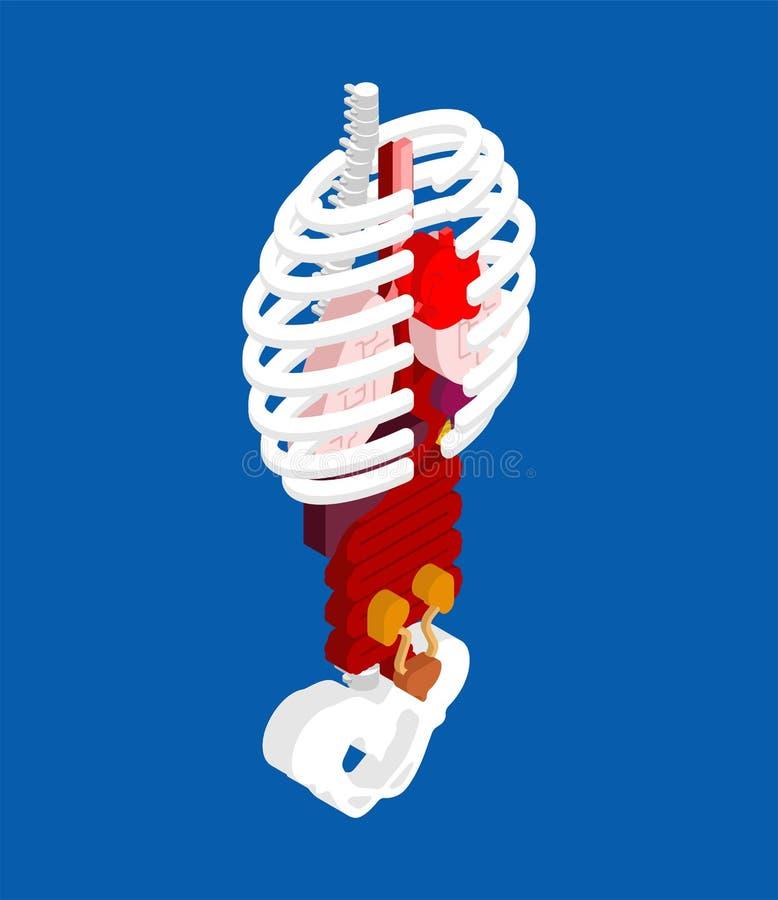 Menschliche Anatomie isometrisch Skelett und innere Organe 3D organ lizenzfreie abbildung