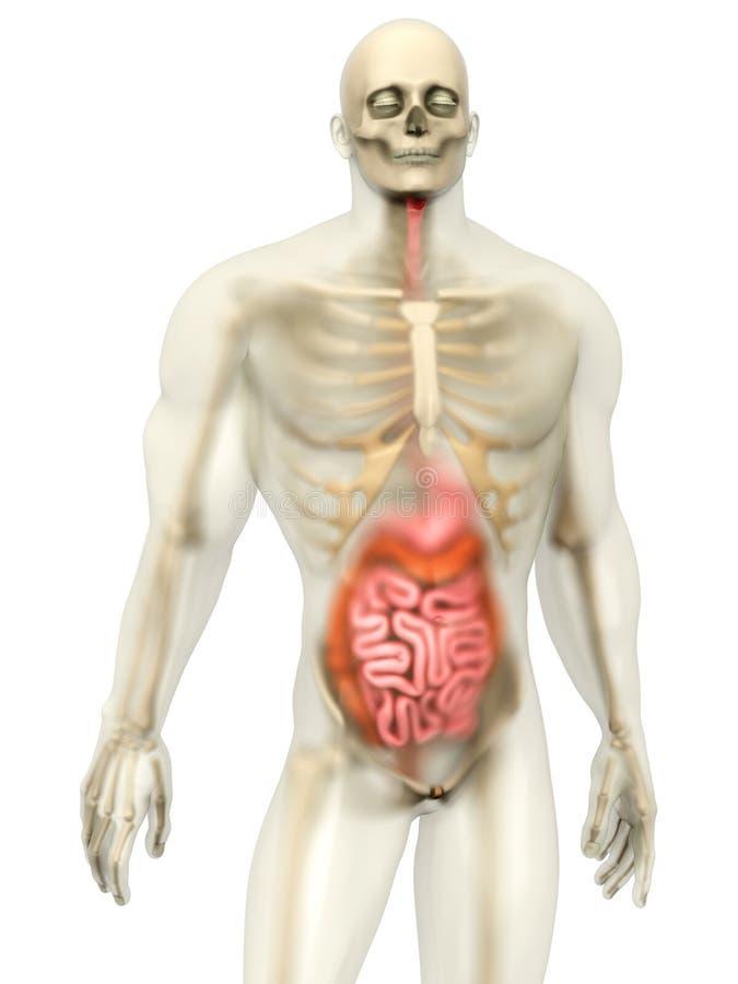 Berühmt Arbeitsmappe Anatomie Und Physiologie Färbung Antworten ...