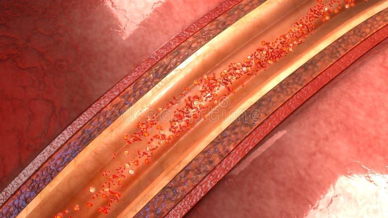 Menschliche Arterie lizenzfreie stockbilder
