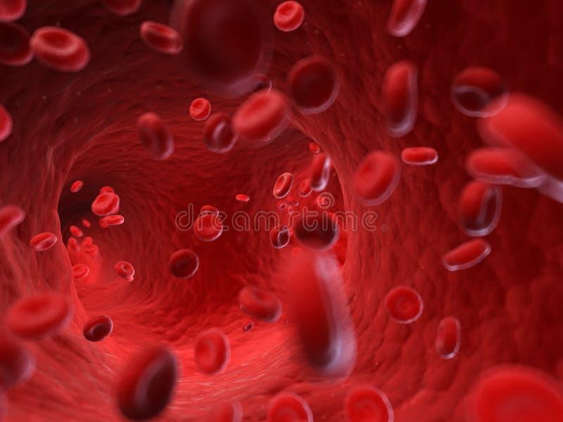 Menschliche Blutzellen vektor abbildung