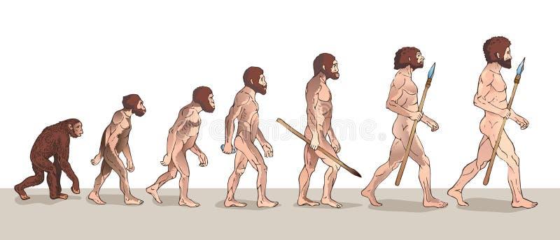 Menschliche Entwicklung Mannentwicklung Historische Illustrationen Menschliche Entwicklungs-Vektor-Illustration stock abbildung