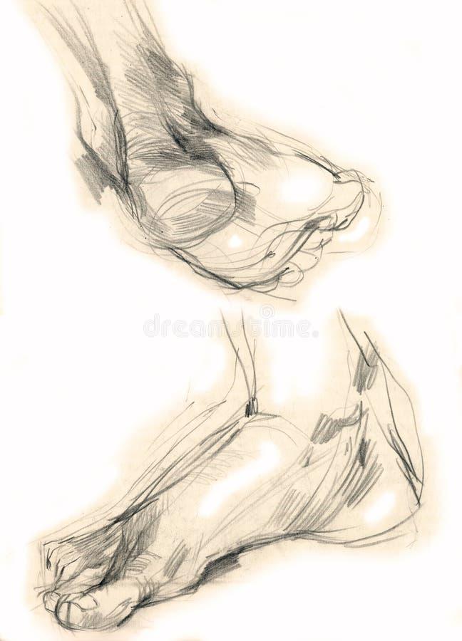 Menschliche Fahrwerkbeine - Zeichnung vektor abbildung