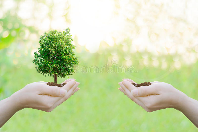 Menschliche Hände des Doppelbelichtungs-Ökologiekonzeptes, die großen Betriebsbaum halten lizenzfreie stockfotografie