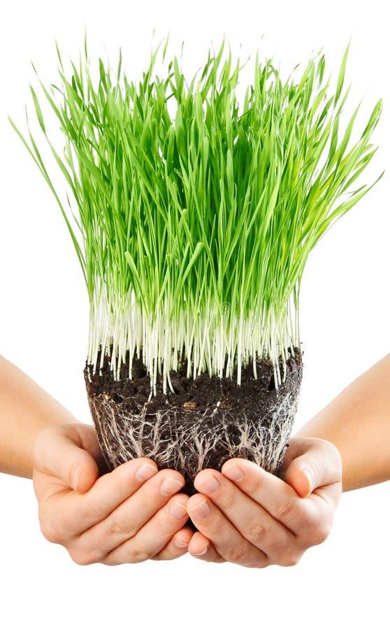 Menschliche Hände, die grünes Gras mit Boden anhalten stockfoto