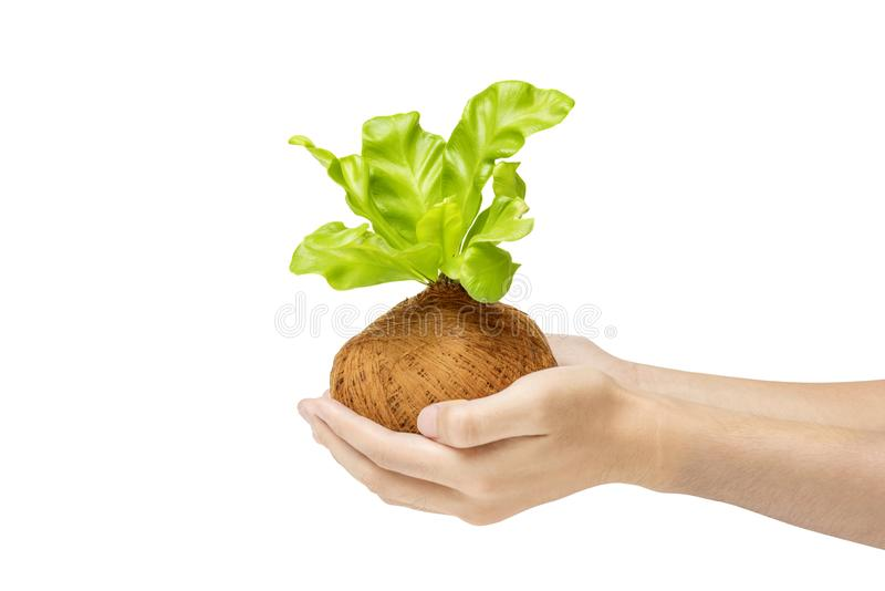 Menschliche Hände, die junge Grünpflanze in den Töpfen halten lizenzfreie stockfotos