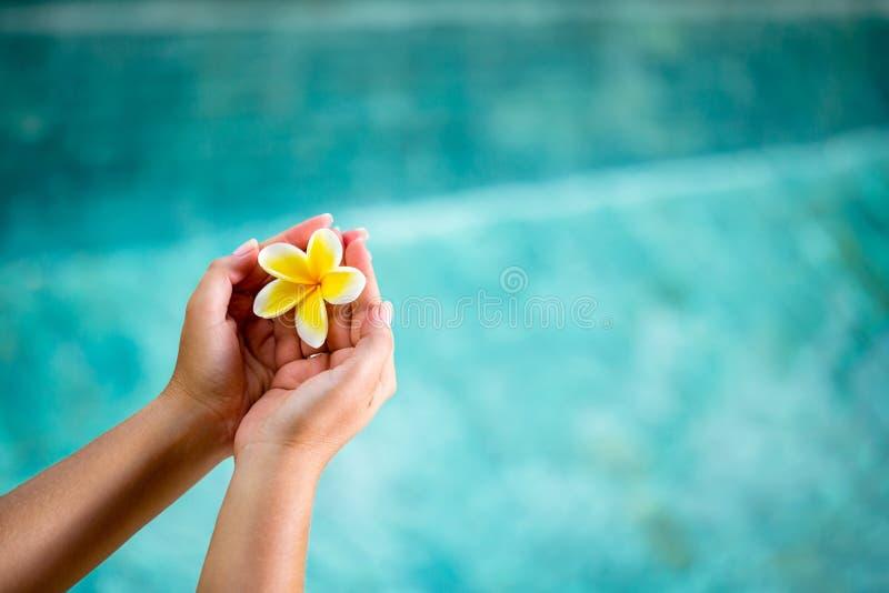 Menschliche Hände, die Plumeriablume halten lizenzfreie stockfotos