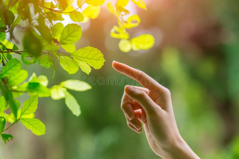 Menschliche Hand, die Finger auf Naturgrünblatt zeigend sich berührt stockbild