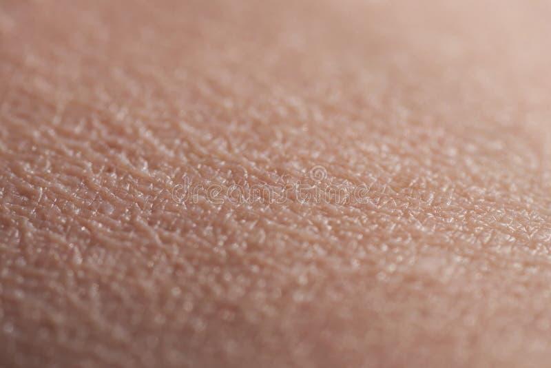 Menschliche Haut-oberer Arm lizenzfreie stockfotos
