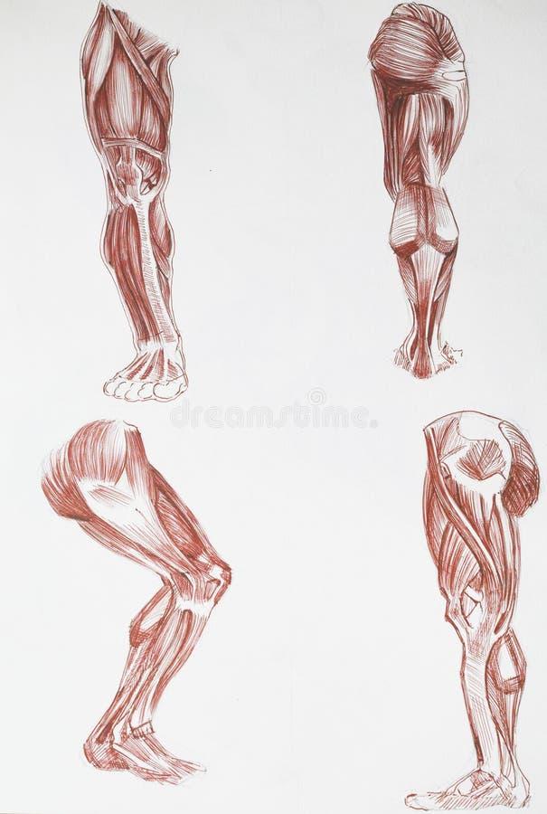 Menschliche Körperteile stock abbildung. Illustration von menschlich ...