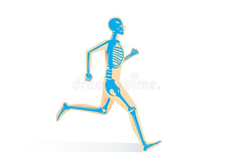 Menschliche Knochen-Anatomie, während Sie gelaufen werden lizenzfreie abbildung