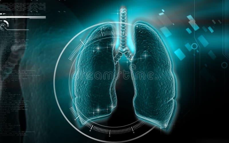 Menschliche Lungen stock abbildung