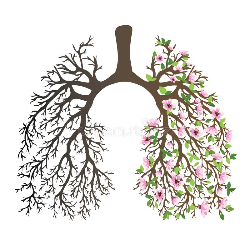 Menschliche Lungen Atmungssystem Gesunde Lungen Licht In Form Eines ...
