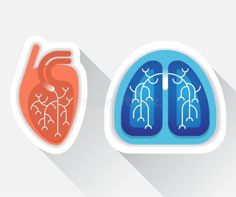 Menschliche Lungen und flache Illustration des Herzens stock abbildung