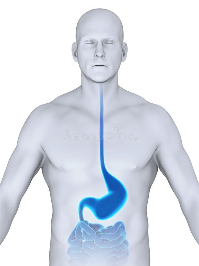 Ungewöhnlich Krebse Innere Anatomie Bilder - Anatomie Ideen ...