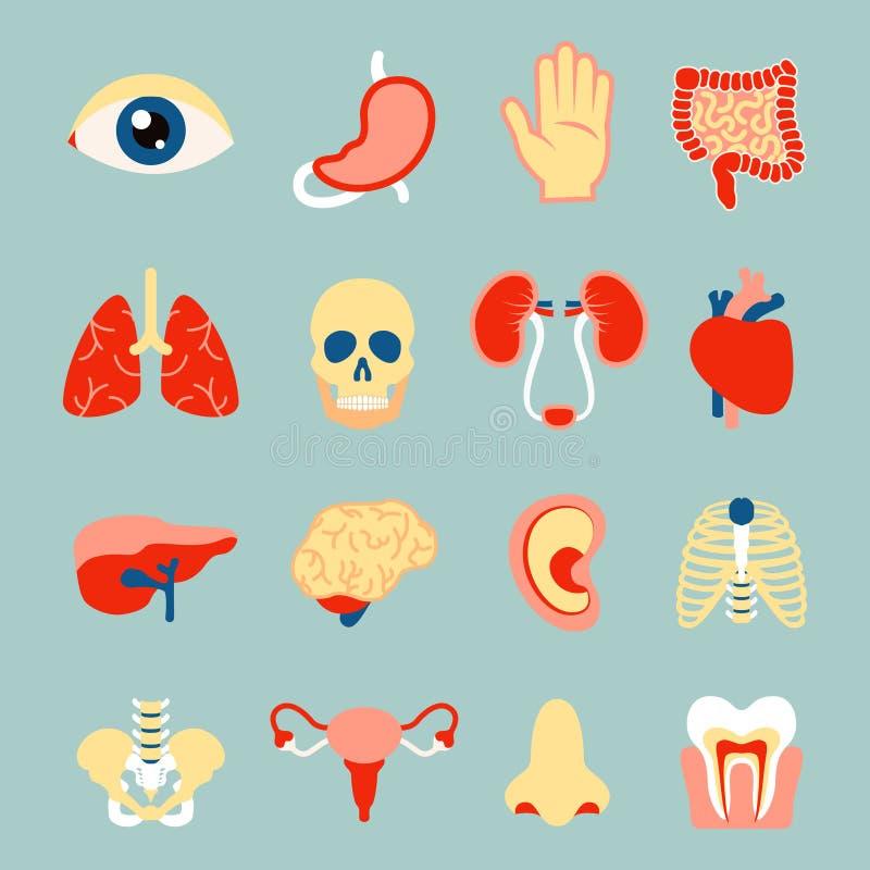 Menschliche Organe eingestellt lizenzfreie abbildung
