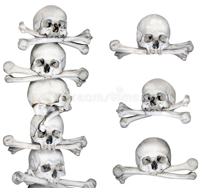 Menschliche Schädel und Knochen lizenzfreie abbildung