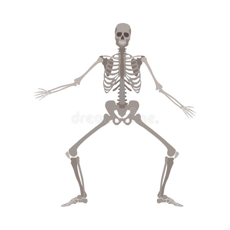 Menschliche Skelettstellung mit den Beinen verbogen und der Arme flacher Art der Karikatur auseinander stock abbildung