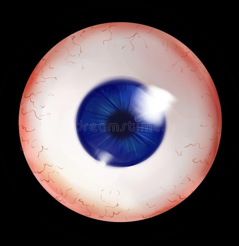 Menschlicher Augapfel mit blauer Iris lizenzfreie abbildung