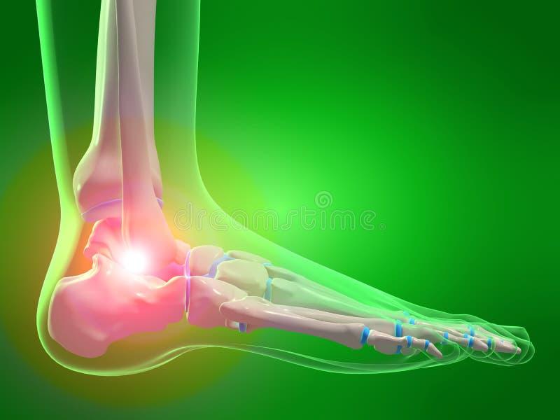 Menschlicher Fuß lizenzfreie abbildung