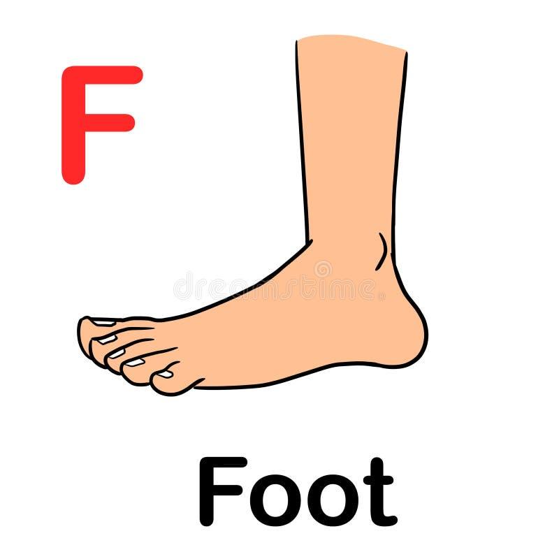 Menschlicher Fuß der Seitenansicht mit der Rechtschreibung des Wortes stock abbildung