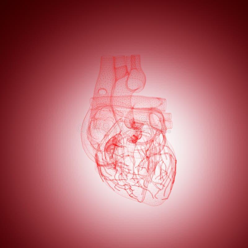 Menschlicher Herzanatomiedraht vektor abbildung