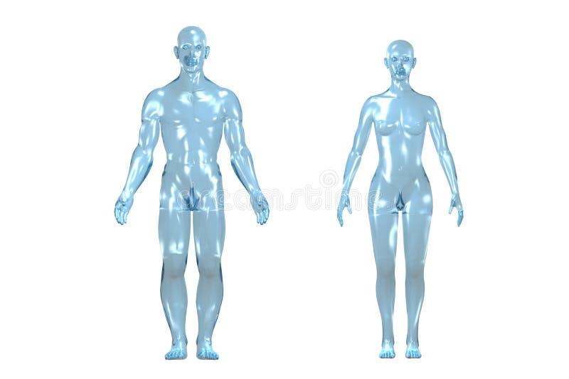menschlicher Körper 3D lizenzfreie abbildung