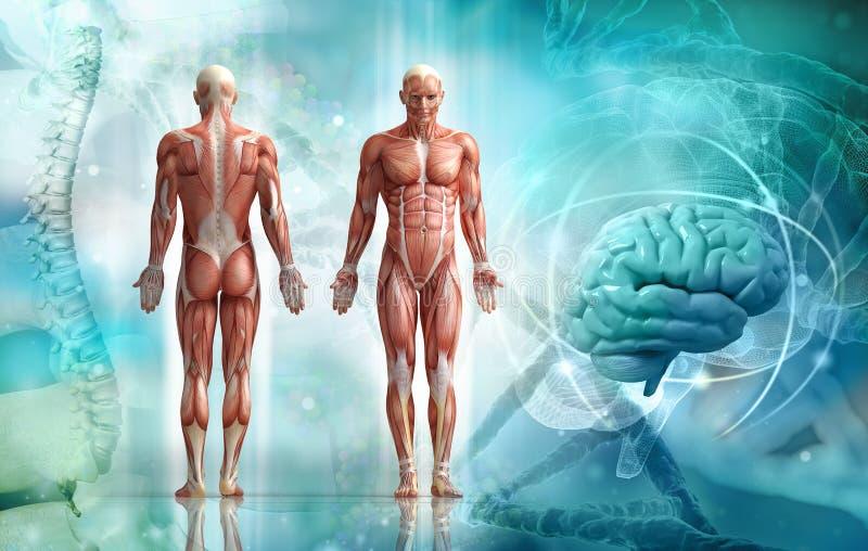 Menschlicher Körper lizenzfreie abbildung