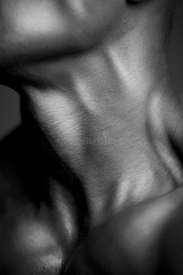 Menschlicher Körper-Abschluss oben stockfotografie