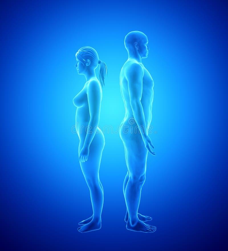 Berühmt Frau Körperanatomie Organe Fotos - Menschliche Anatomie ...