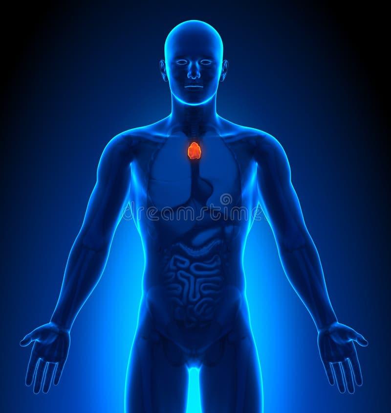 Ausgezeichnet Menschliches Körperbild Ideen - Anatomie und ...