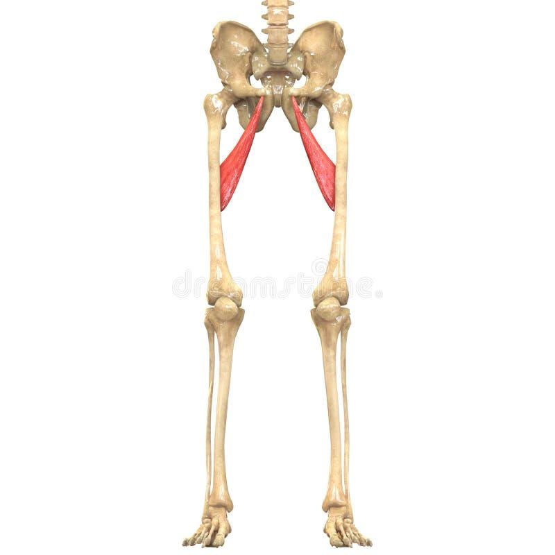 Groß Anatomie Und Physiologie Steckdosen Fotos - Menschliche ...