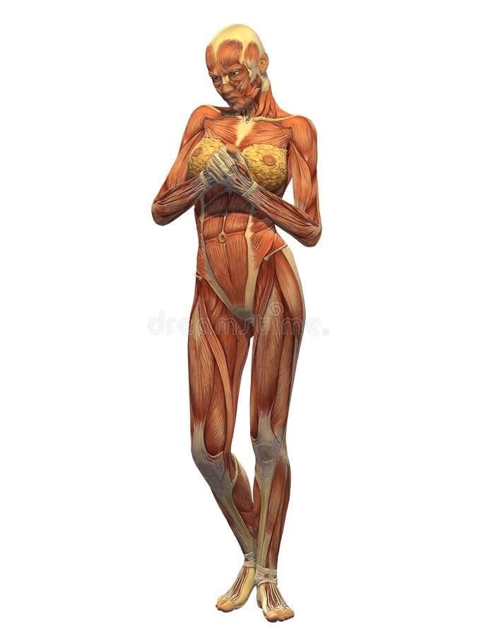 Fantastisch Menschlicher Körper Muskel Diagramm Zeitgenössisch ...