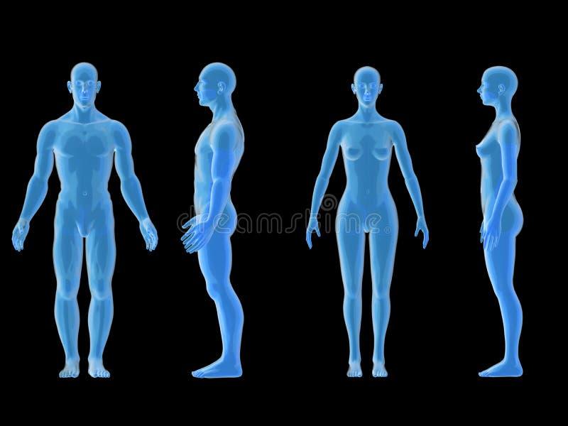 Erfreut Organe Von Körperbild Bilder - Menschliche Anatomie Bilder ...