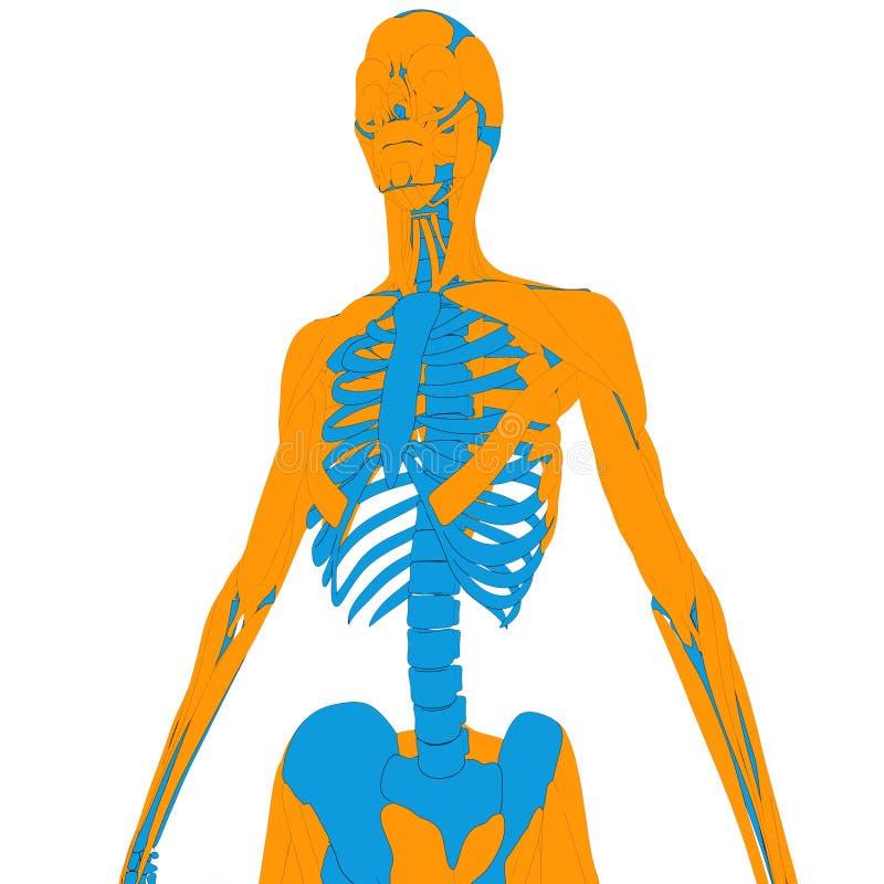 Gemütlich Interaktiver Menschlicher Körper Fotos - Menschliche ...