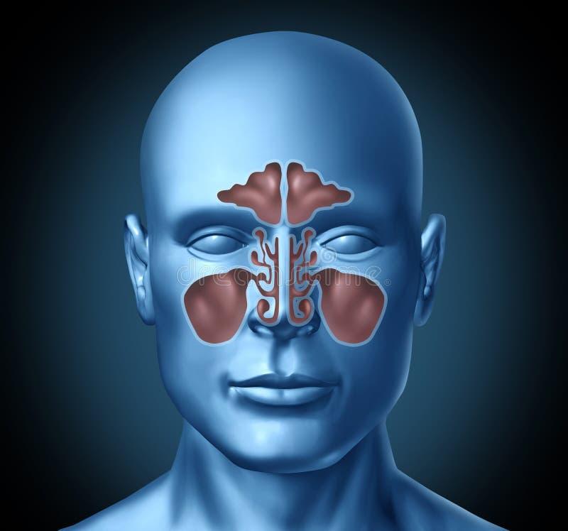 Menschlicher nasaler Raum der Kurve mit menschlichem Kopf vektor abbildung