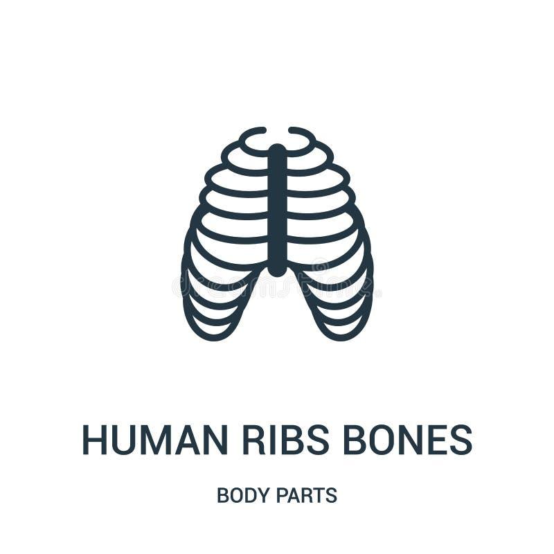 menschlicher Rippenknochen-Ikonenvektor von der Körperteilsammlung Dünne Linie menschliche Rippenknochenentwurfsikonen-Vektorillu lizenzfreie abbildung