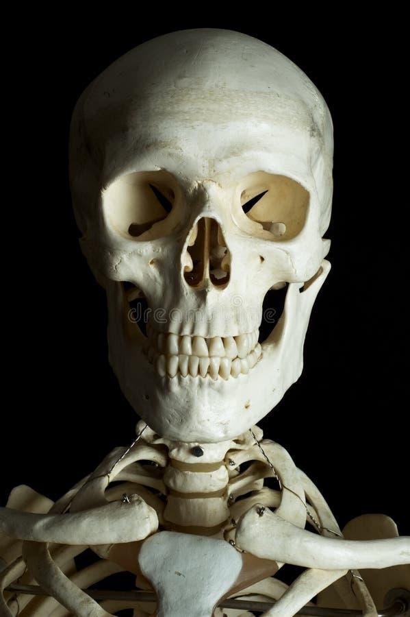 Menschlicher Schädel lizenzfreie stockfotografie