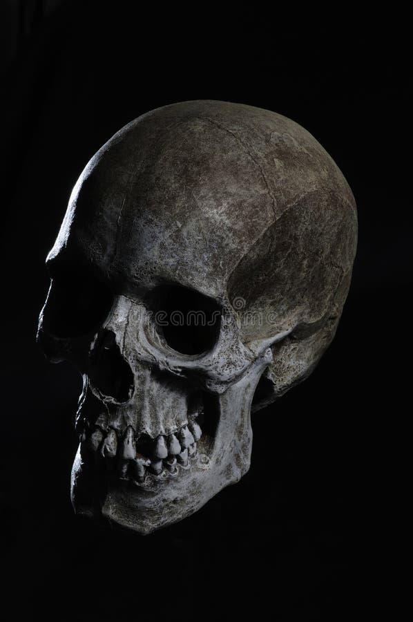 Download Menschlicher Schädel stockfoto. Bild von gesundheit, furcht - 9088914