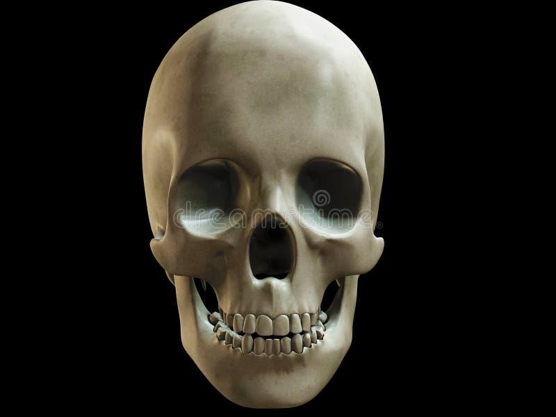 Menschlicher Schädel vektor abbildung
