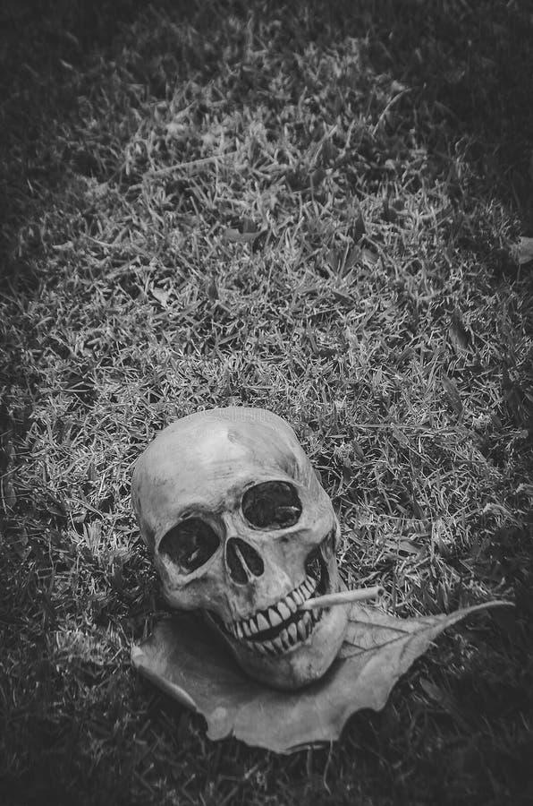 Menschlicher Schädel, der die Zigarette auf Grashintergrund, schwarzer weißer Ton der Weinlese, Stilllebenphotographieart raucht stockfoto